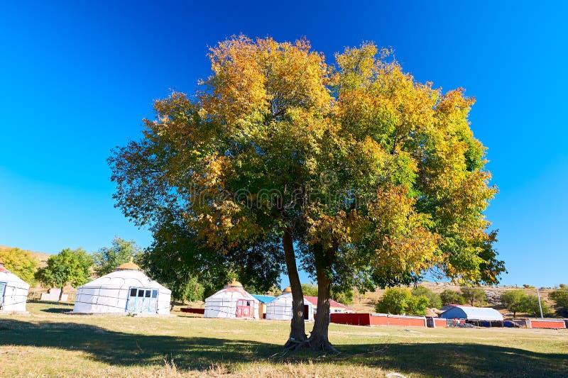 De de herfstbomen en de blauwe hemel stock foto