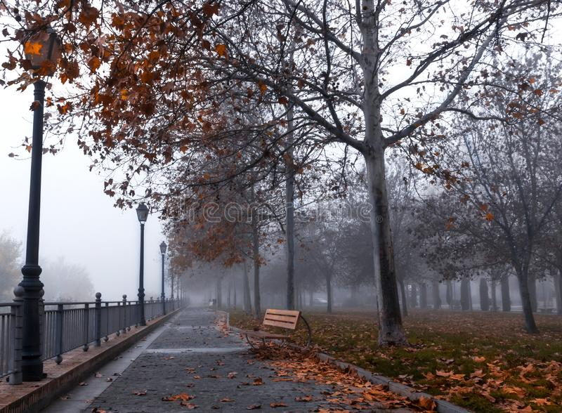 De herfstbomen met mist in een stadspark stock afbeeldingen