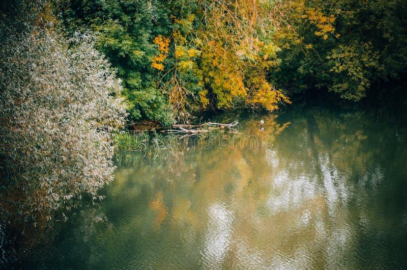 De herfstbomen op de rivier stock afbeeldingen