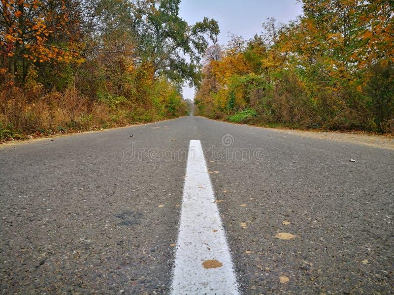 De herfstbomen op de zijweg stock afbeelding