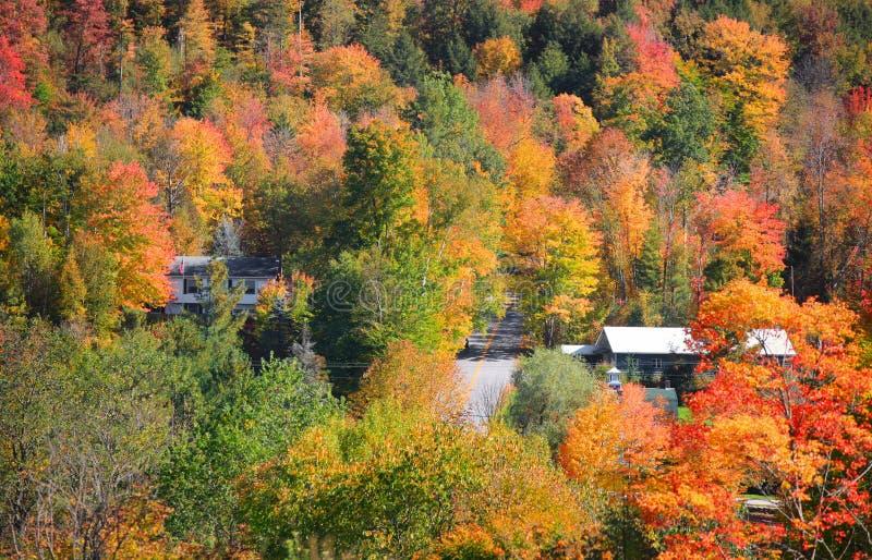 De herfstbomen in Vermont dichtbij Waterville stock afbeeldingen