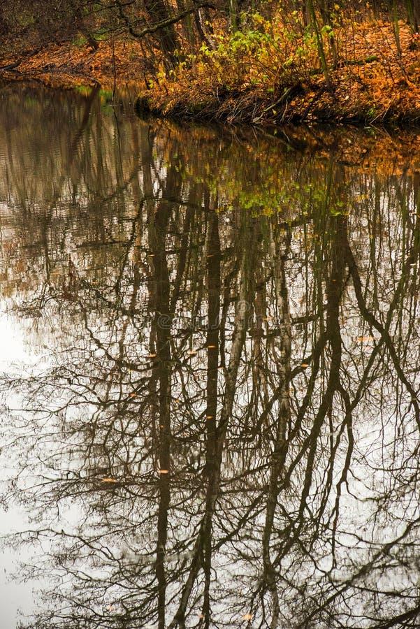 De herfstbomen zonder bladeren in water worden weerspiegeld dat royalty-vrije stock foto