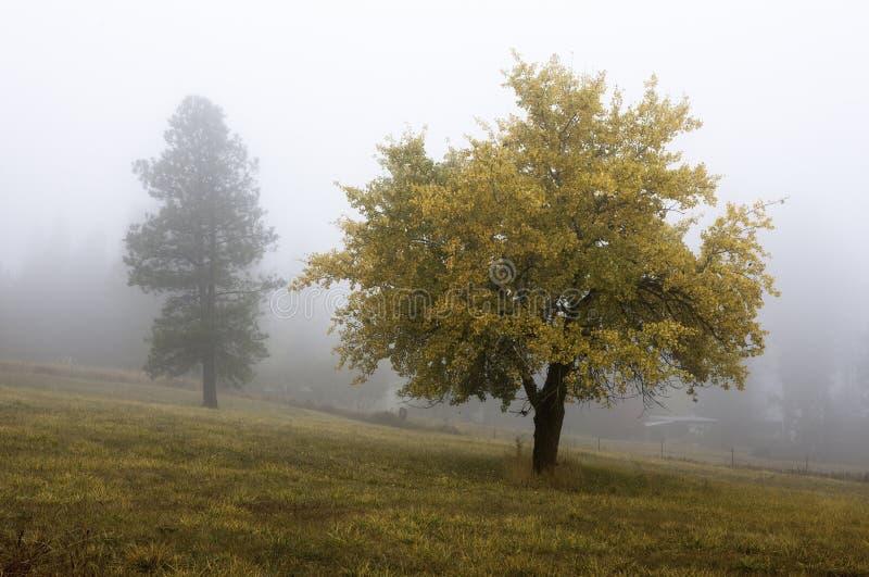De herfstboom in mist. royalty-vrije stock foto