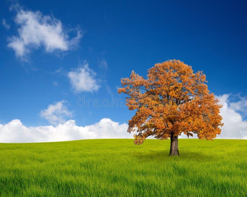 De herfstboom op het gebied stock afbeelding