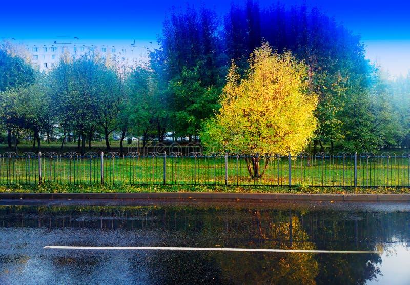 De herfstboom in park na de achtergrond van het regenlandschap stock fotografie