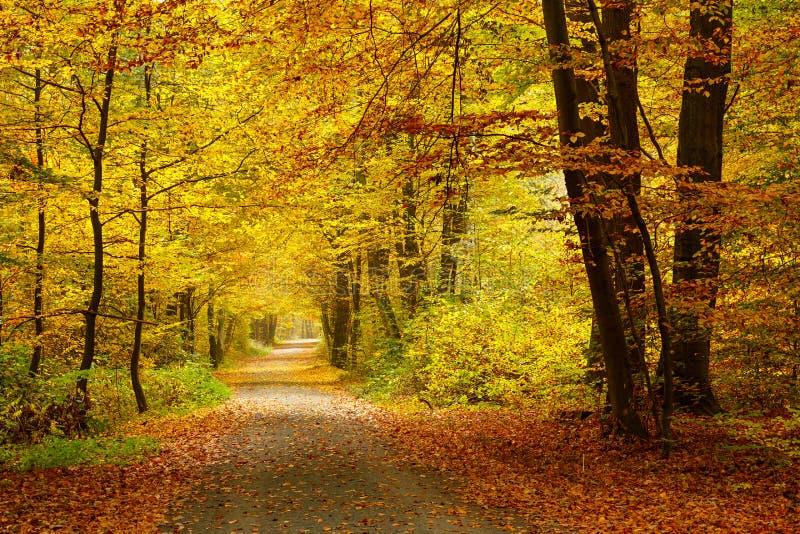 De herfstbos royalty-vrije stock foto