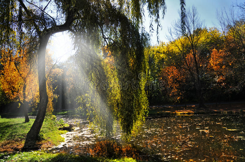 De herfstbos bij zonsondergang. Zonsondergang in het hout royalty-vrije stock foto
