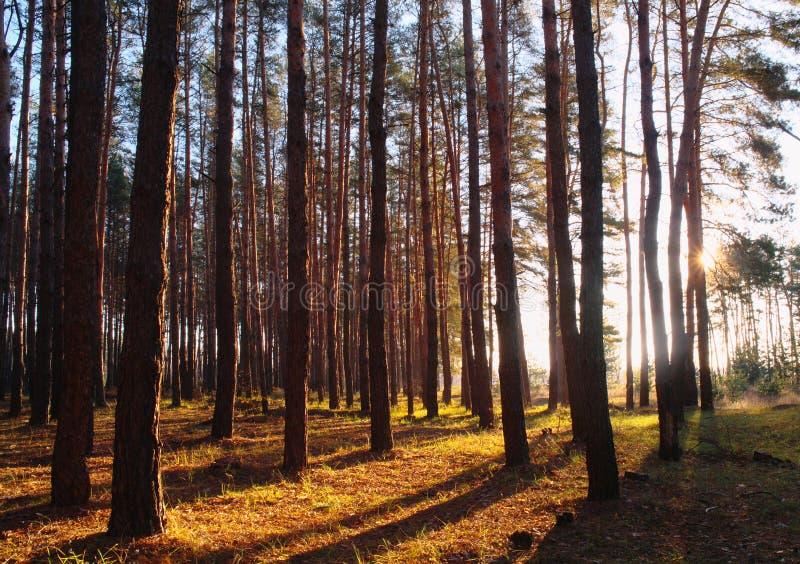 De herfstbos in de ochtendmist royalty-vrije stock afbeelding