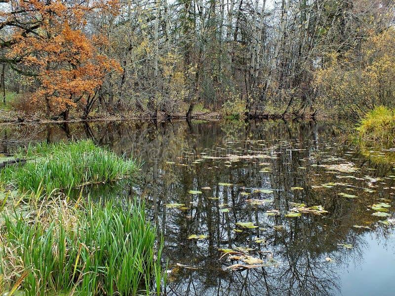 De herfstbos in een bosmeer wordt weerspiegeld dat De gouden Herfst Bezinning van de hemel in water De laatste warme de herfstdag stock fotografie