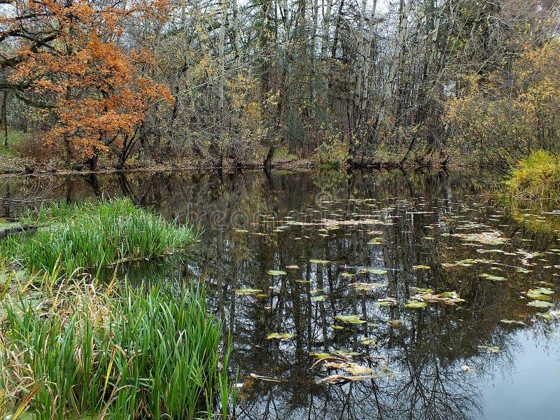 De herfstbos in een bosmeer wordt weerspiegeld dat De gouden Herfst Bezinning van de hemel in water De laatste warme de herfstdag royalty-vrije stock foto's