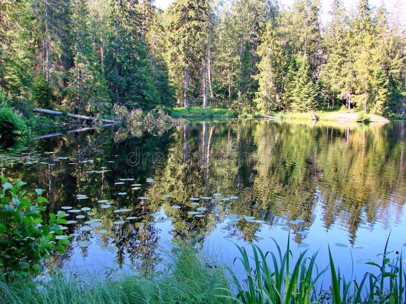 De herfstbos in een bosmeer wordt weerspiegeld dat De gouden Herfst Bezinning van de hemel in water De laatste warme de herfstdag stock afbeeldingen