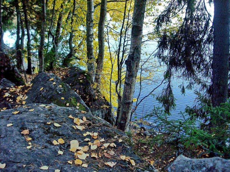 De herfstbos in een meer wordt weerspiegeld dat De gouden Herfst Bezinning van de hemel in water De laatste warme de herfstdagen  stock afbeeldingen