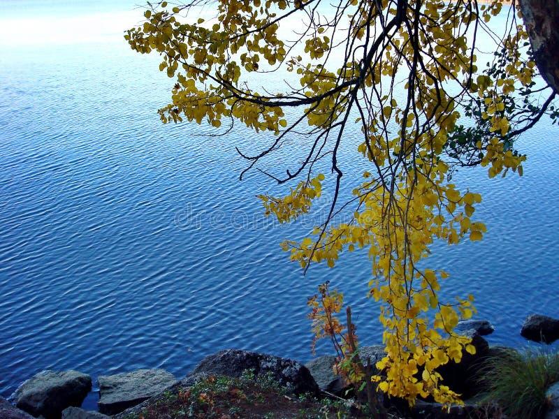 De herfstbos in een meer wordt weerspiegeld dat De gouden Herfst Bezinning van de hemel in water De laatste warme de herfstdagen  royalty-vrije stock fotografie