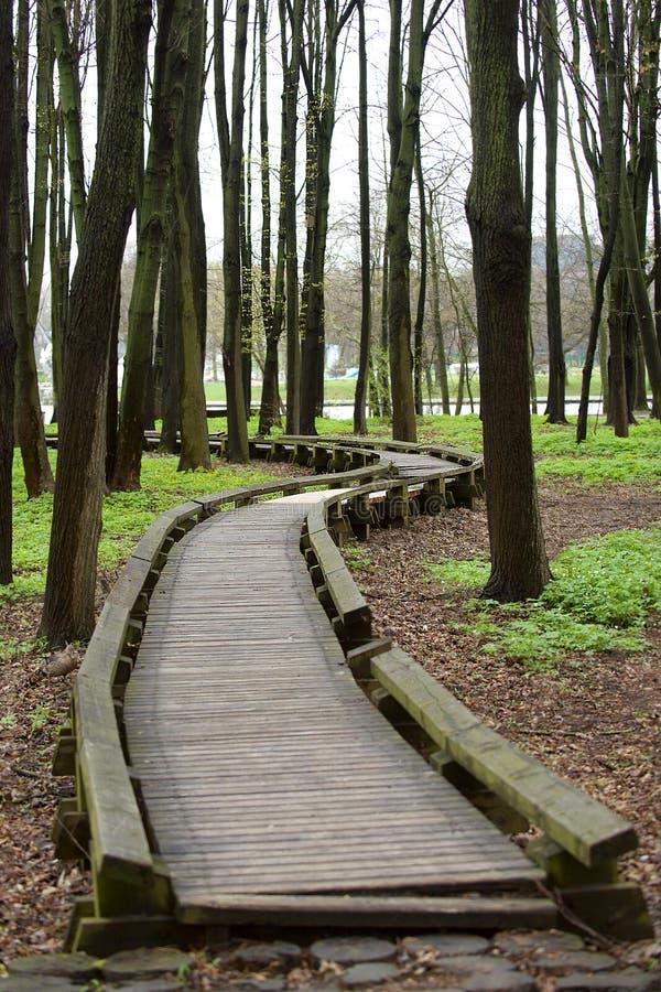De herfstbos en een weg van houten raad in het park royalty-vrije stock afbeelding