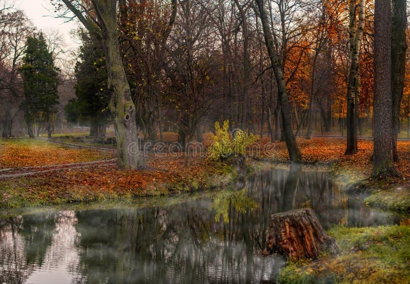 De herfstbos en rivier. Daglicht in het hout stock afbeeldingen