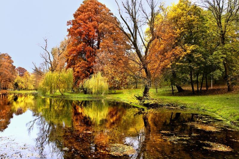 De herfstbos en rivier. Daglicht in het hout royalty-vrije stock afbeelding