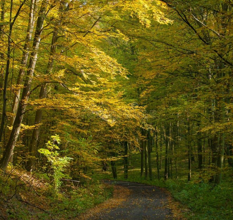De herfstbos en weg stock fotografie