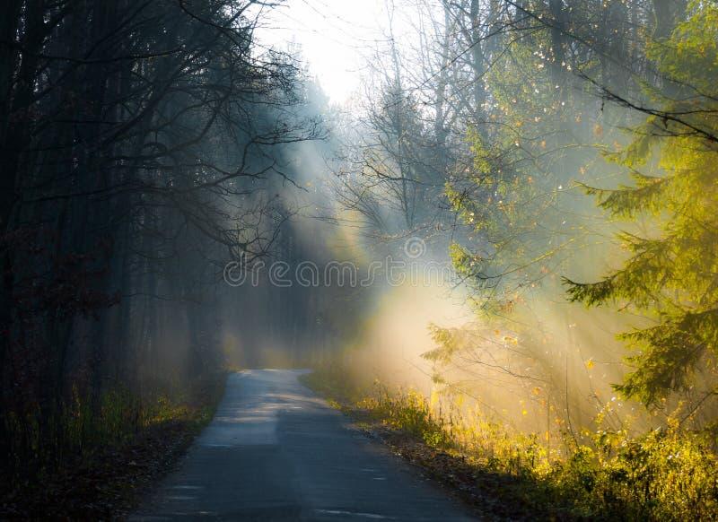 De herfstbos en weg royalty-vrije stock foto's