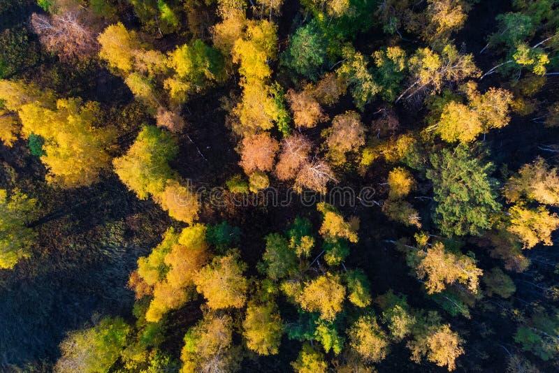 De herfstbos Gemengd bosweergeven van hierboven Lucht Photography stock foto