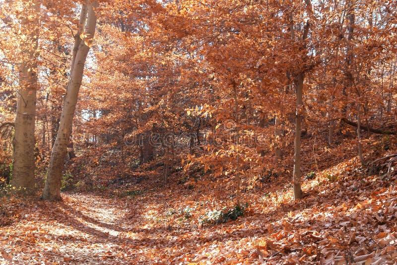 De herfstbos in het Park van de Rotskreek, Washington DC - Verenigde Staten royalty-vrije stock foto's