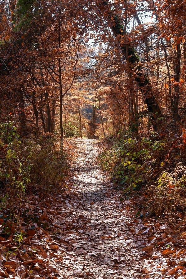 De herfstbos in het Park van de Rotskreek, Washington DC - Verenigde Staten royalty-vrije stock foto