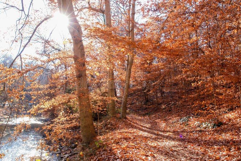 De herfstbos in het Park van de Rotskreek, Washington DC - Verenigde Staten royalty-vrije stock afbeelding