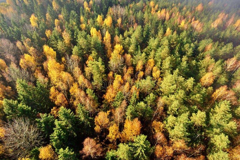 De herfstbos met hoogten stock foto