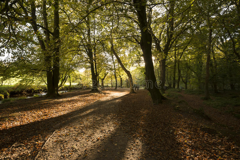 De herfstbos met lange schaduwen bij Golitha-Dalingen Cornwall, het UK stock afbeeldingen