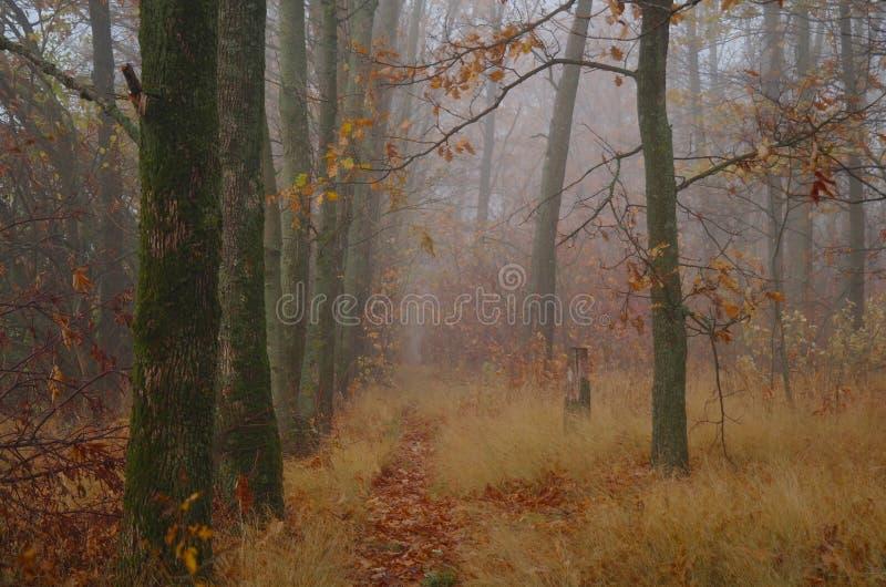 De herfstbos met nevelige ochtend stock foto's