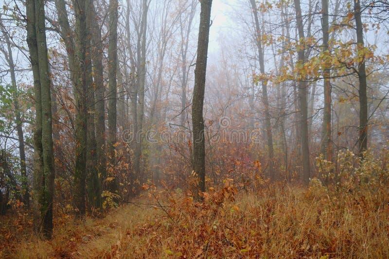 De herfstbos met nevelige ochtend royalty-vrije stock fotografie