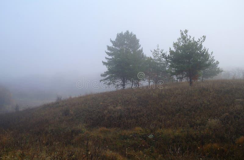 De herfstbos met nevelige ochtend royalty-vrije stock afbeeldingen