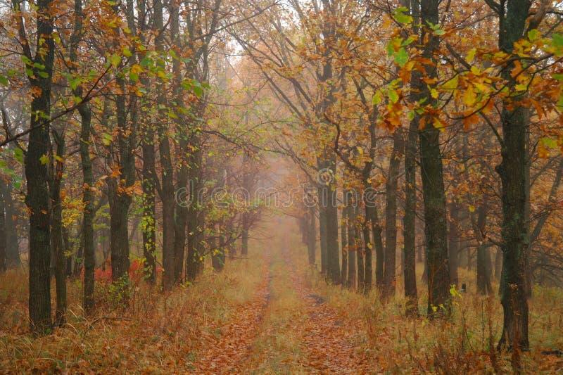 De herfstbos met nevelige ochtend stock fotografie