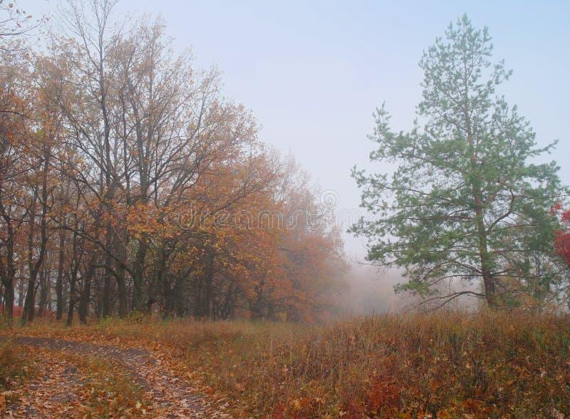 De herfstbos met nevelige ochtend royalty-vrije stock afbeelding