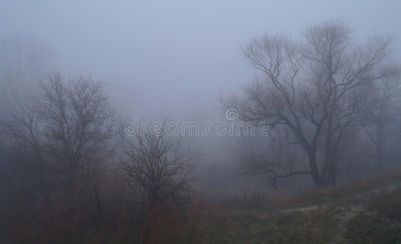 De herfstbos met nevelige ochtend stock foto
