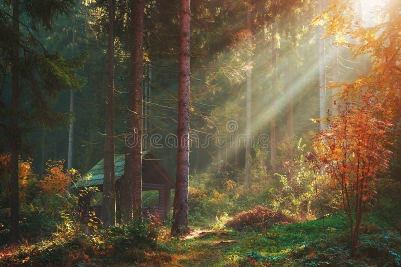De herfstbos met zonstralen en houten blokhuispaviljoen Warm weer in mening van het pijnboom de boslandschap royalty-vrije stock afbeelding