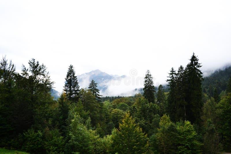 De herfstbos in de mist in de bergenfoto royalty-vrije stock afbeeldingen