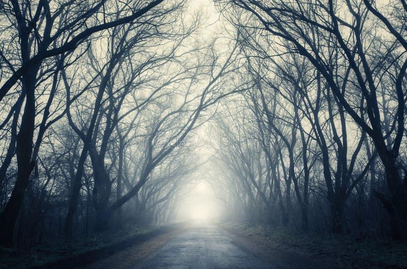 De herfstbos in mist Mooi Natuurlijk Landschap Uitstekende stijl stock afbeeldingen
