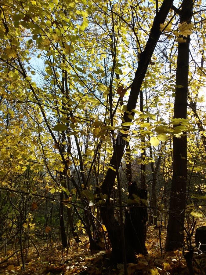 De herfstbos op een duidelijke zonnige dag stock foto's