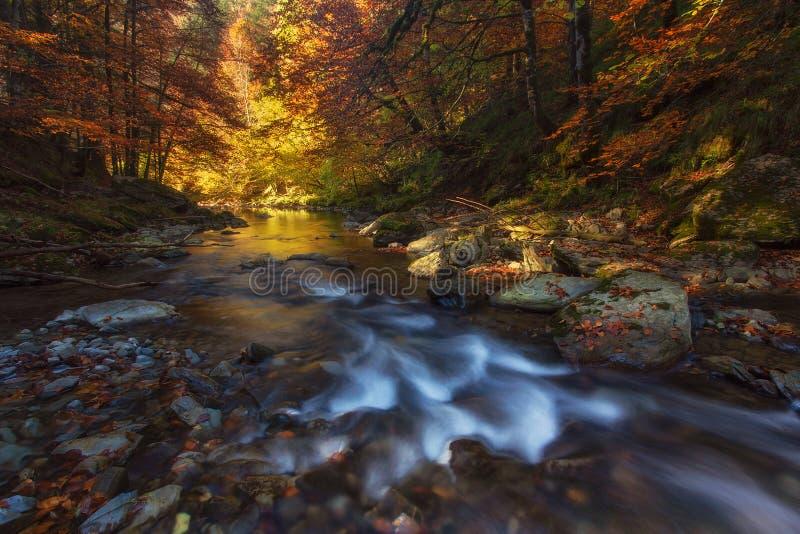 De herfstbos over Irati-rivier in Navarra stock foto