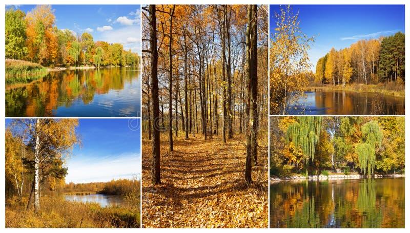 De herfstcollage die uit 5 percelen bestaan stock foto's