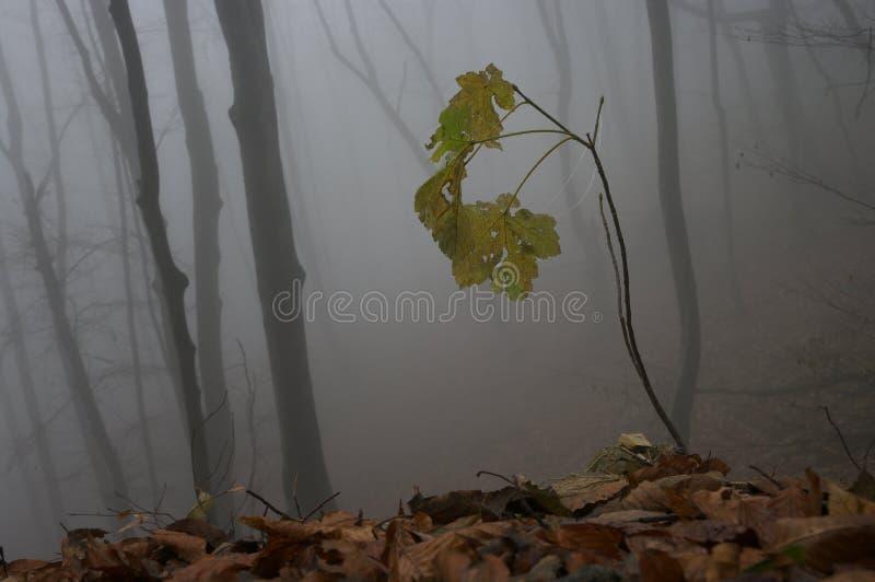 De herfstdetail royalty-vrije stock foto