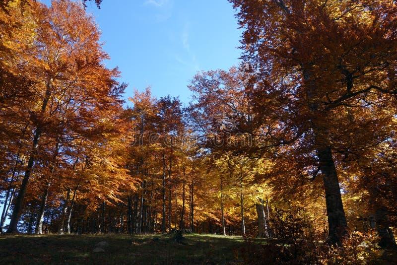 De herfstdroom meer dan de hoogten Ciucas-Bergen 2 stock afbeelding