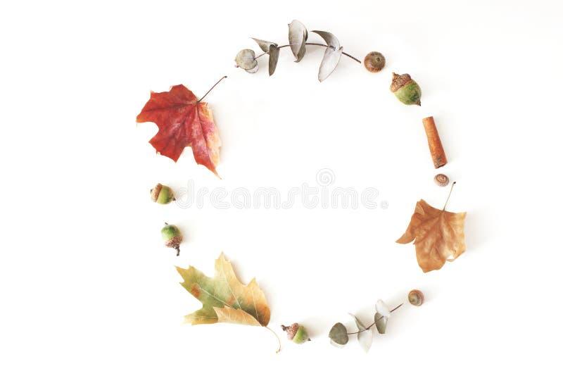 De herfstesdoorn, eucalyptus en eiken die bladeren op een witte lijstachtergrond wordt gelegd De samenstelling van de dalingscirk stock foto's