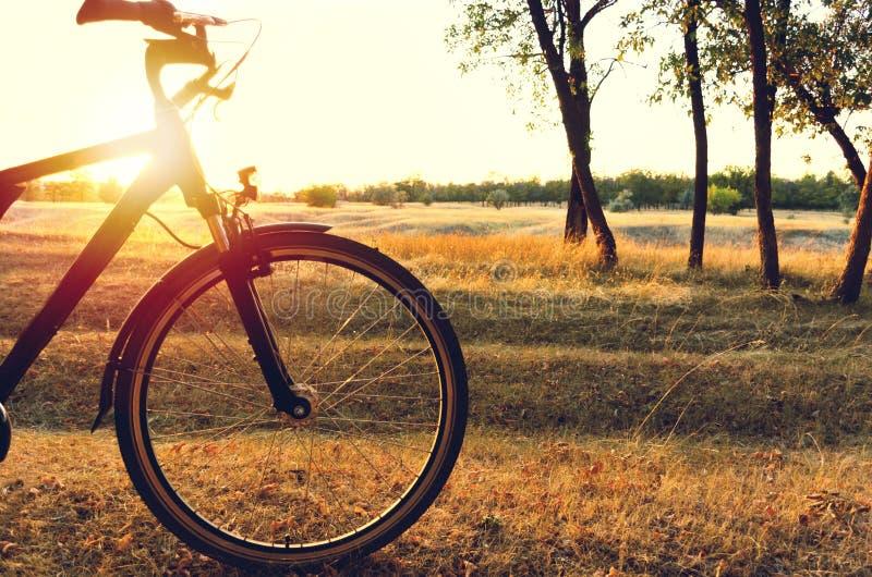De de herfstgang op een fiets in het de herfstbos de zon glanst door de fiets stock afbeelding