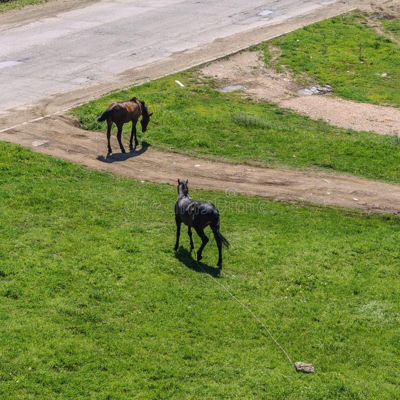 De herfstgebied met paarden stock afbeelding