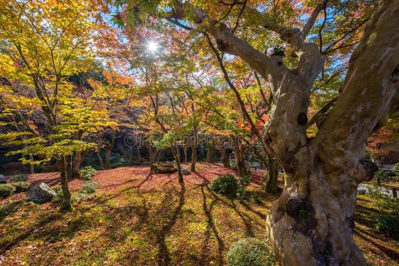 De herfstgebladerte bij Enkoji-Tempel stock fotografie