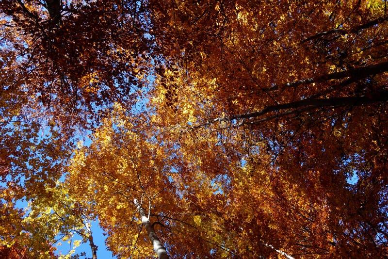 De herfstgebladerte in Karpatische Bergen 1 stock foto