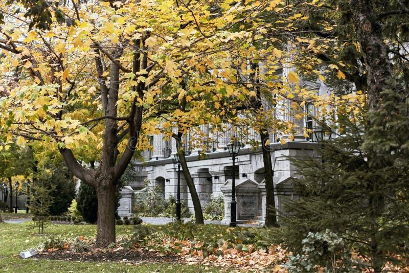 De herfstgebladerte in Montreal, Canada stock afbeeldingen
