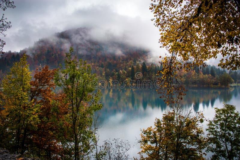 De herfstgebladerte op Afgetapt Meer stock afbeelding