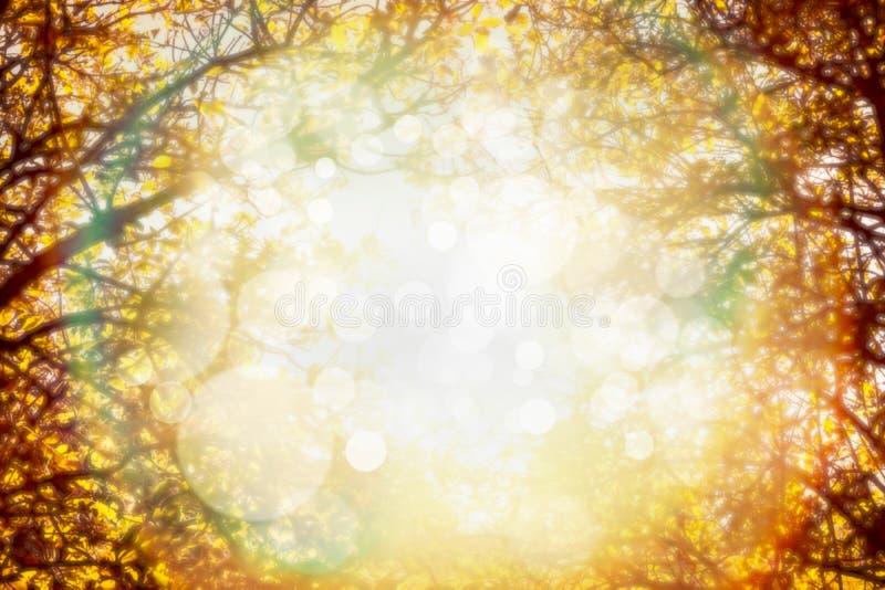 De herfstgebladerte op bomen over zonlicht in tuin of park De vage achtergrond van de dalingsaard royalty-vrije stock afbeelding